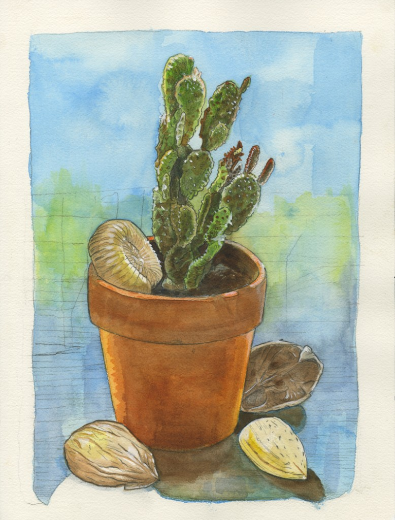 A cactus, a fossil, and some nuts.  Watercolor/duh