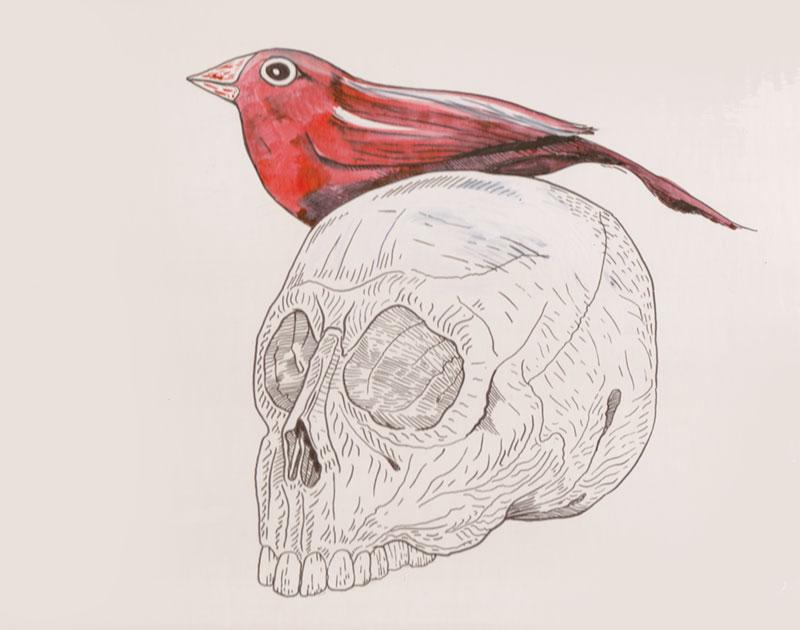 Skull-&-Bird-800